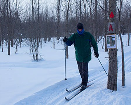 Cross-Country Skiing Beaver Valley Grey Highlands