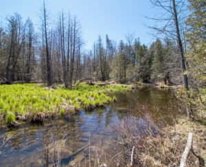 Featured Listing 90+ Acre Parcel Hwy 6+10